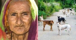 Pilit na Inaalagaan ng Isang Matanda ang mga Asong Kaniyang Napupulot; Isa Pala sa mga Ito'y Magdadala sa Kaniya ng Swerte